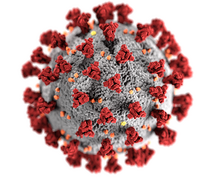 Illustration des Coronavirus SARS-CoV-2